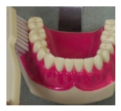 toothbrush4
